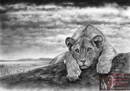 Mighty Fine Art - Page on Lions-Wild