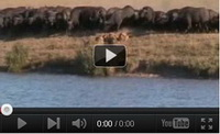 Video feed page - Awareness for Lions