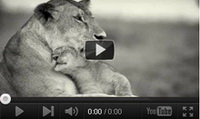 Video feed page - Awareness for Lions 6