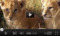 Video feed page - Awareness for Lions 8