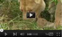 Video feed page - Lions Vs ____ on BBC